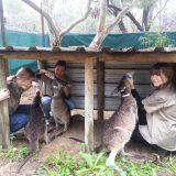 Students with kangaroos at a Native ARC environmental excursion